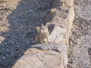 Bryce Canyon (27)_lzn