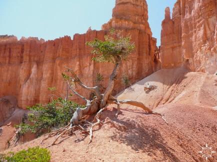 Bryce Canyon (9)_lzn